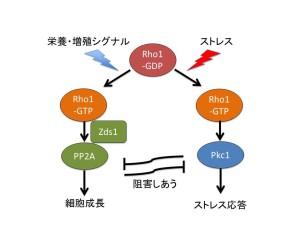 PP2Amodel(J)